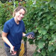 Urlaub am Biobauernhof Agriturismo in der Toskana für einen schönen Urlaub bei Volterra und dem meer, incanto del fiume Weinlese