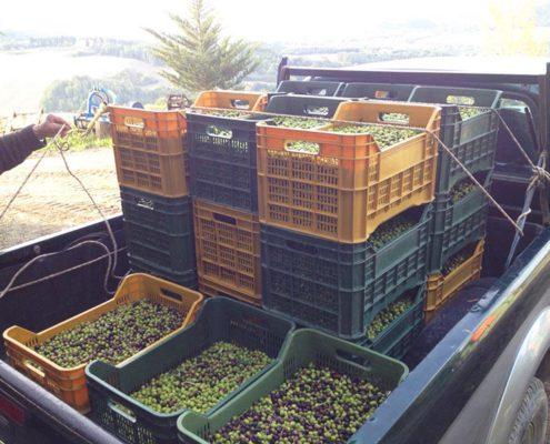 Urlaub am Biobauernhof Agriturismo in der Toskana für einen schönen Urlaub bei Volterra und dem meer, incanto del fiume
