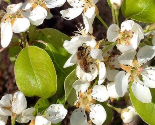 die bienen im biobauernhof in der toskana ein bio-agriturismo mit ferienwohnungen und pool